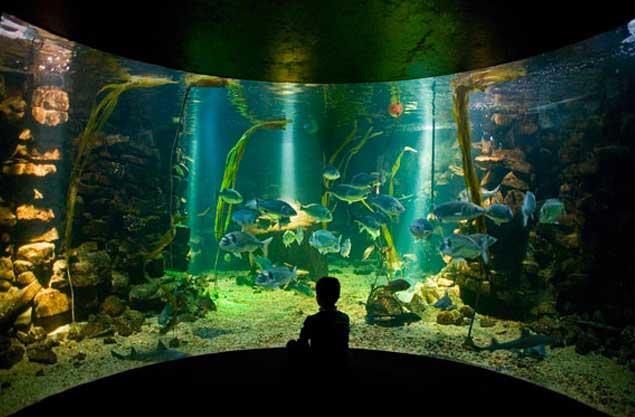 Sea Zoo Anglesey